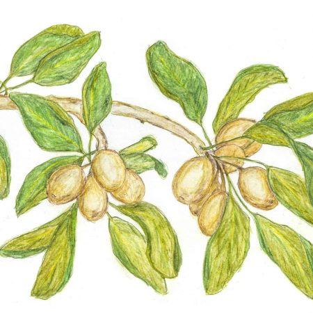 AMOR LUSO - Manteiga de Karité 2