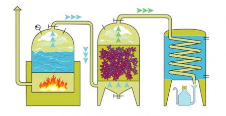 óleos essenciais, como é extraído, destilação